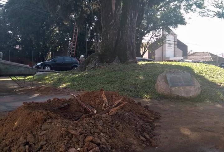 AMA quer processar a Vivo por ter perfurado e cortado raízes do Cipreste
