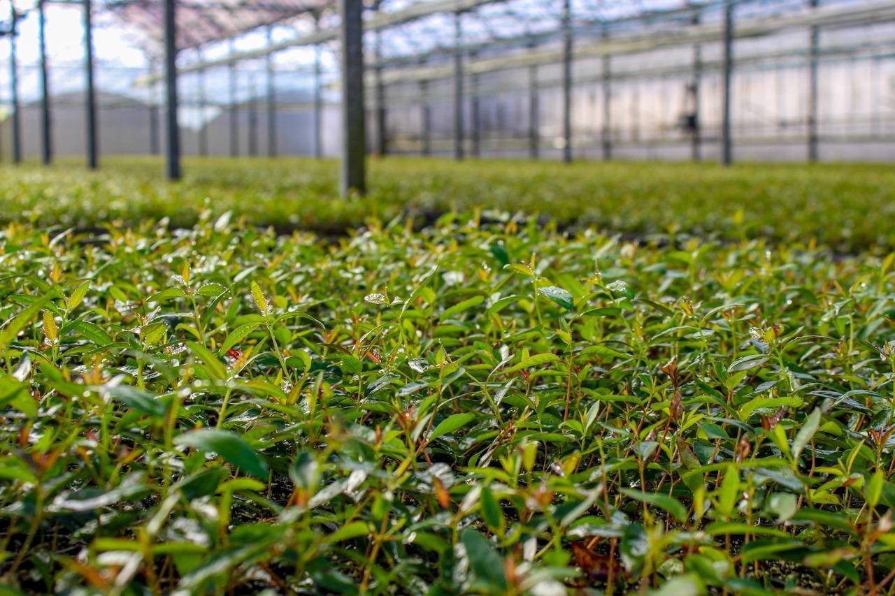 CMPC é premiada como uma das empresas florestais mais sustentáveis do mundo