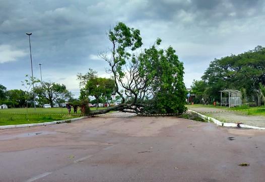 Temporal deste domingo derruba árvores, outdoors e deixa bairros sem energia em Guaíba