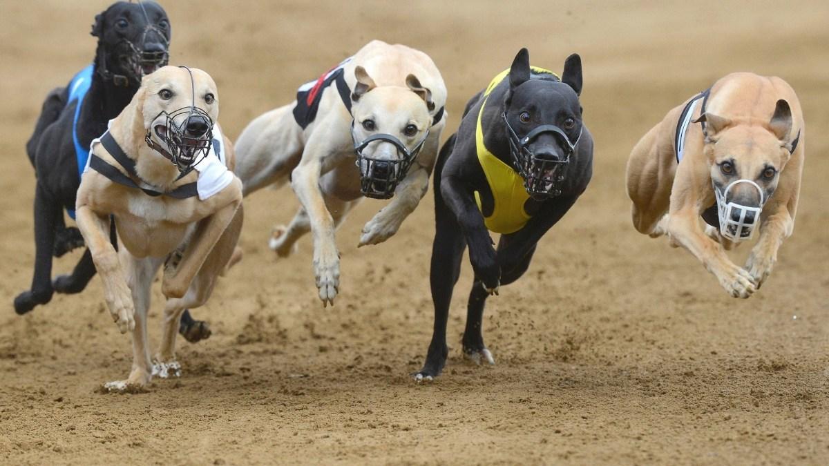 Decreto proíbe corridas de cães no RS e Projeto de Lei que consolida proteção aos animais é enviado à Assembleia