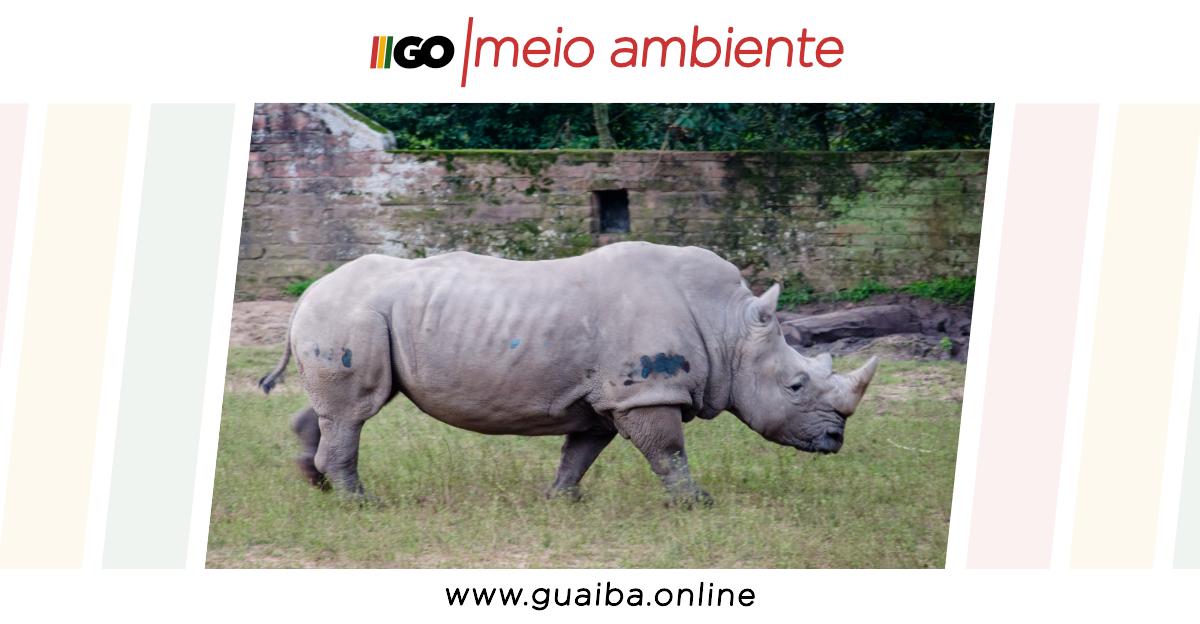 Governo do RS aprova novo edital para concessão do Zoológico de Sapucaia do Sul